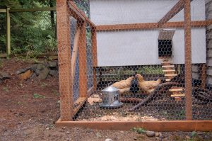 The new coop