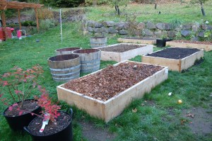 Raised beds and wine barrel planters
