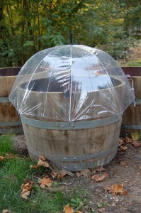 Umbrella over wine barrel