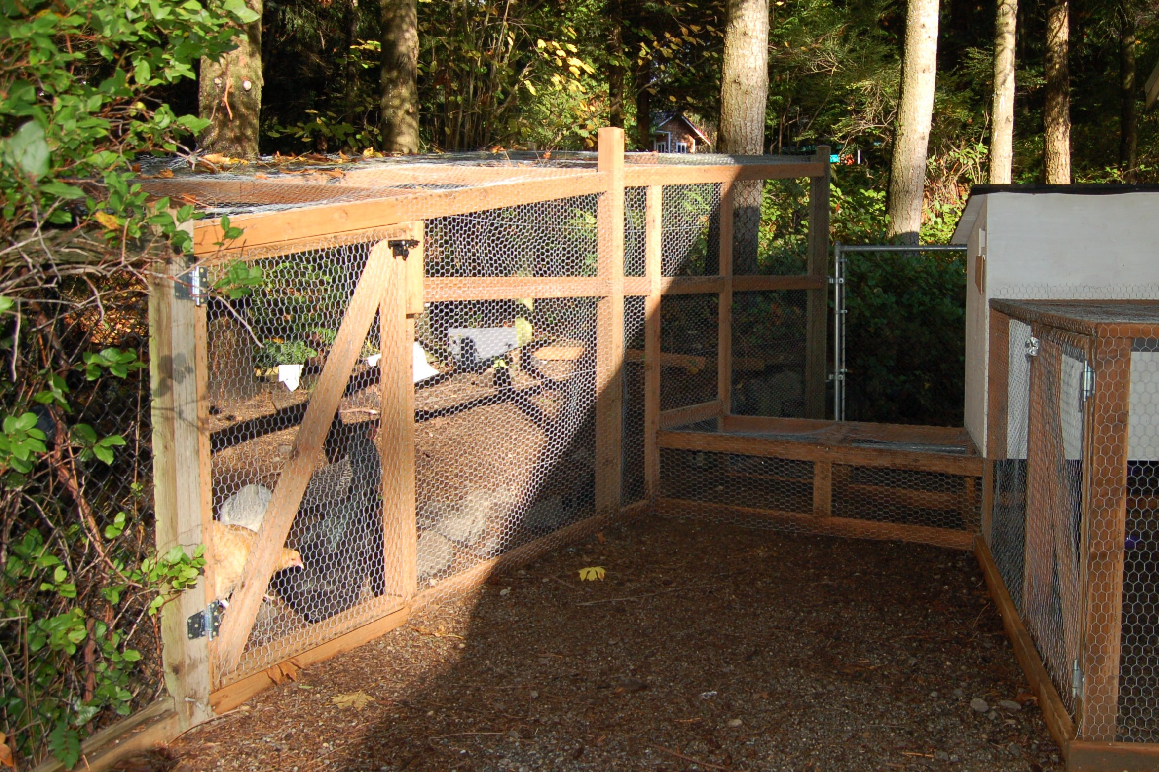 Chicken coop extension chicken tunnel and the north wing for Enclosed chicken run plans