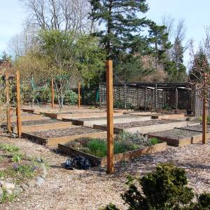 Raised bed garden in Beaverton, OR