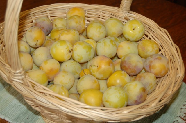 Basket of Shiro plums