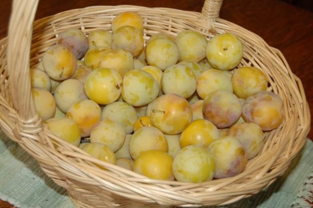 Basket of Shiro plums