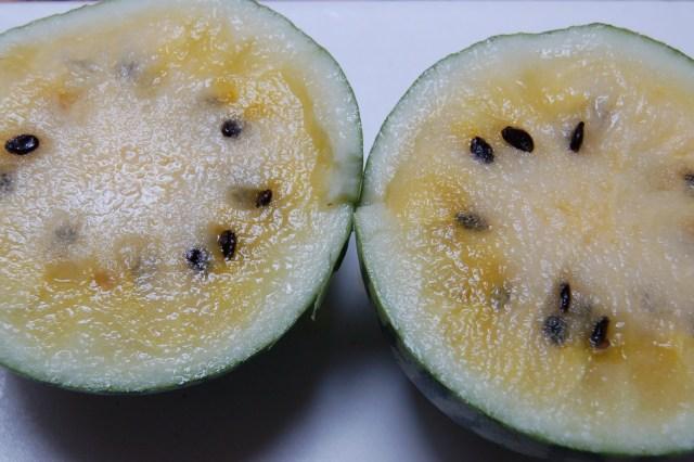 Yellow Doll watermelon
