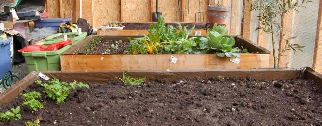Raised beds in the greenhouse