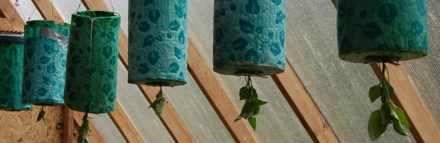 Pepper plants in hanging planters