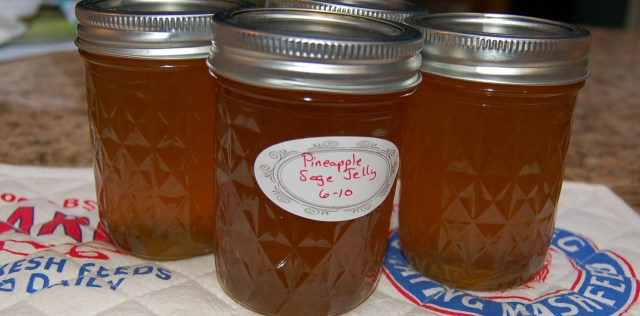 Pineapple sage jelly - yummy!
