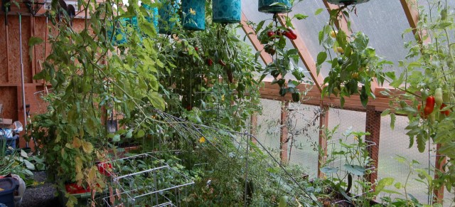 Greenhouse plants: peppers, tomatoes, cucumbers