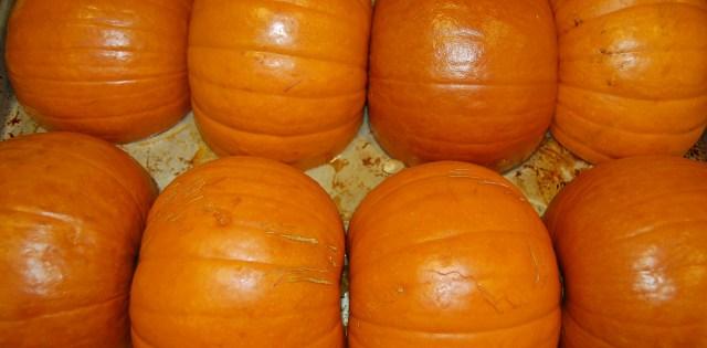 Baked sugar pumpkins