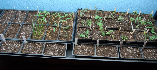 Seed starting under grow lights