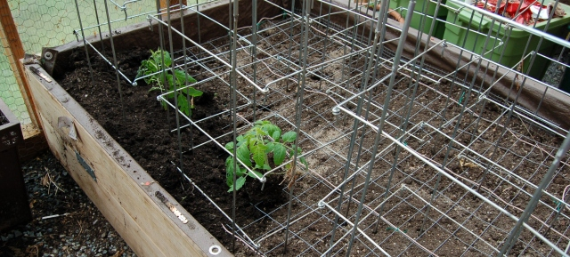 Planting the hot bed