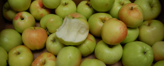 Gravenstein and Chehalis apples