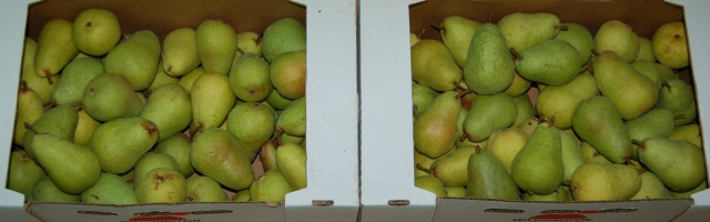Green Barlett pears